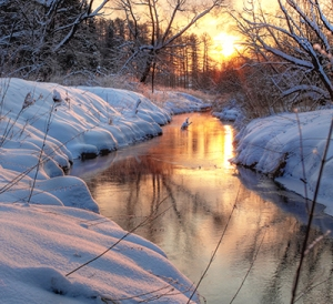 Forest River. winter sunset