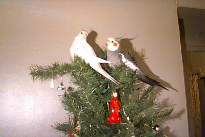 2004-christmas-mithril-and-aragorn-in-tree